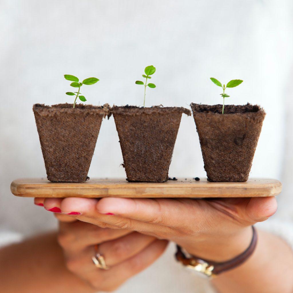 Cuidados de las plantas de www.josgallplant.com